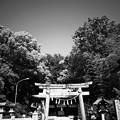 Photos: 大鳥大社