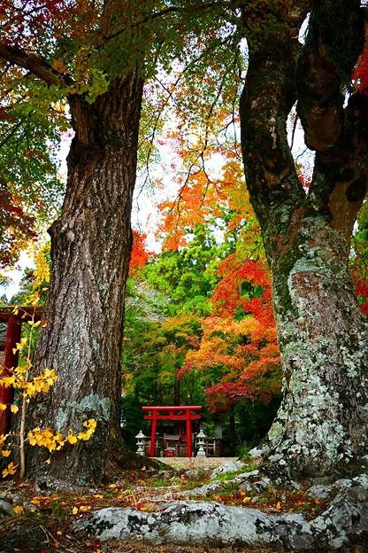 愛宕神社の紅葉