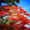 写真: 紅葉と雲