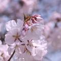Photos: 見頃