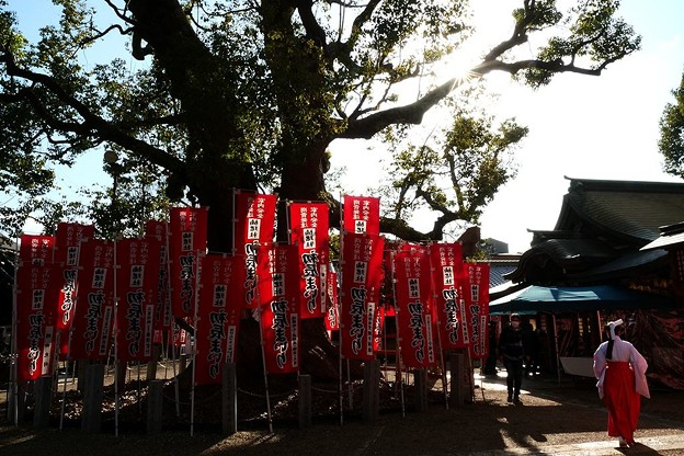 Photos: 神木