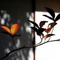 Photos: 茶室前
