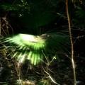 Photos: 眩しい光