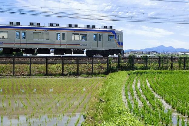 二上山~田んぼとケリと、時々、電車~