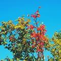 Photos: 緑から赤へ