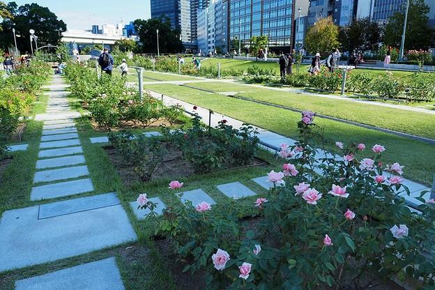Photos: 中之島バラ園