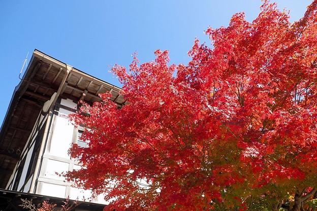 Photos: 高野山の紅葉