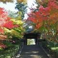 山門の紅葉