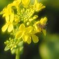 Photos: ミツバチの季節