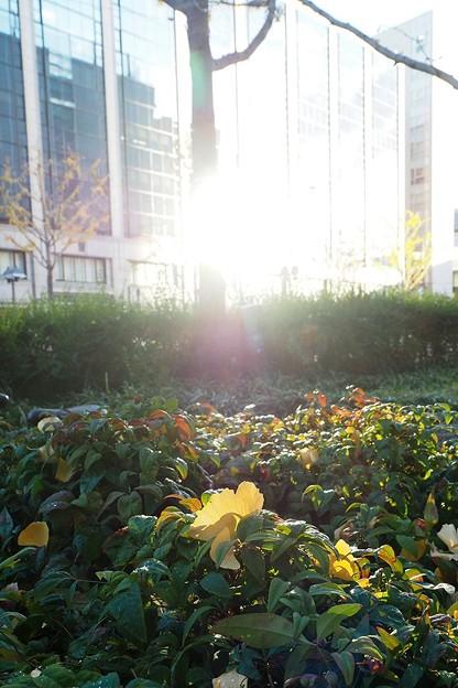 Photos: 窓の反射