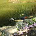 緑が池に映って来てます