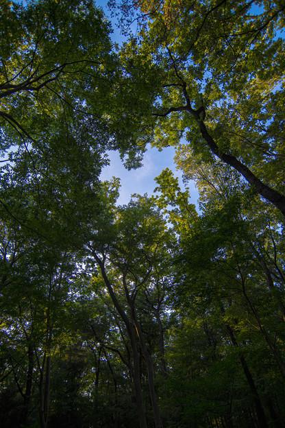 夕暮れの林から