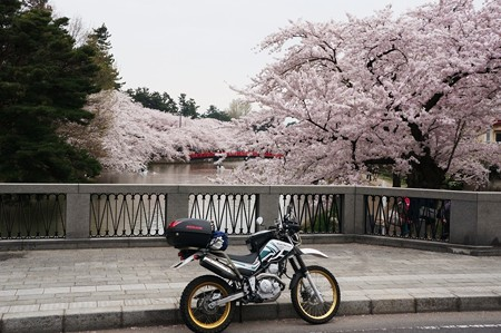 弘前公園_01