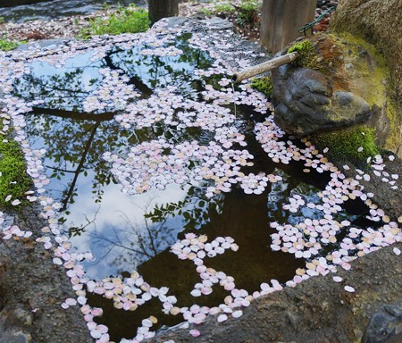桜吹雪の痕