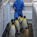 Photos: 20170415 長崎ペンギン水族館 27