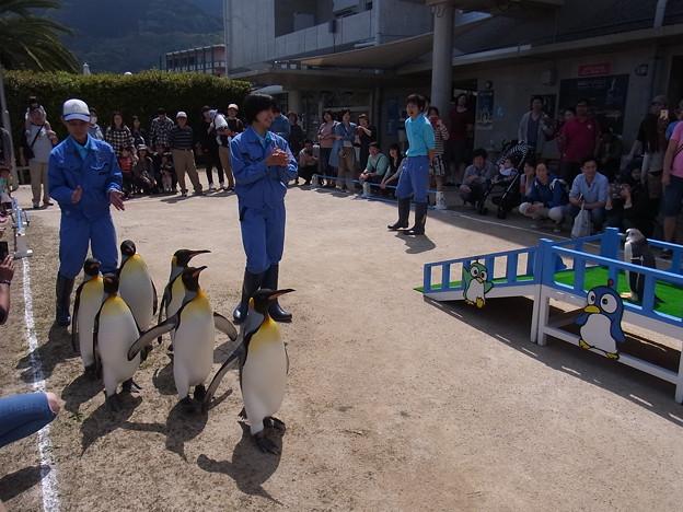 20170415 長崎ペンギン水族館 28
