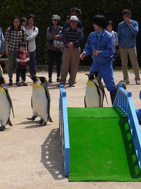 20170415 長崎ペンギン水族館 32