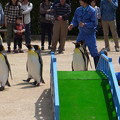 Photos: 20170415 長崎ペンギン水族館 32