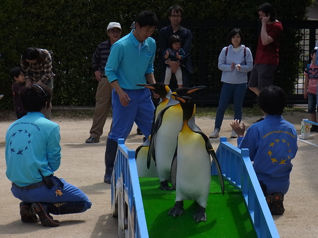 20170415 長崎ペンギン水族館 34