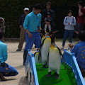 Photos: 20170415 長崎ペンギン水族館 34