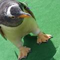 20170415 長崎ペンギン水族館 39