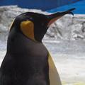Photos: 20180620 長崎ペンギン水族館 ジュン05
