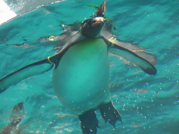 20180620 長崎ペンギン水族館 ジュン16