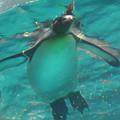 写真: 20180620 長崎ペンギン水族館 ジュン16