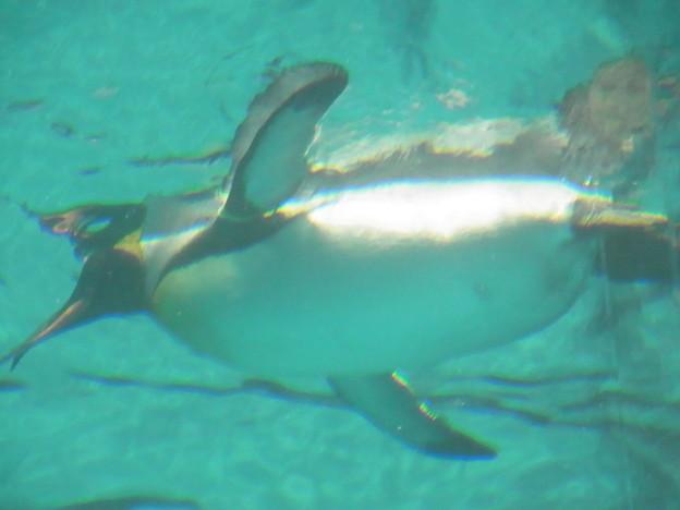 20180620 長崎ペンギン水族館 ジュン17