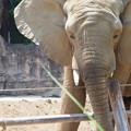 Photos: 多摩動物公園 103