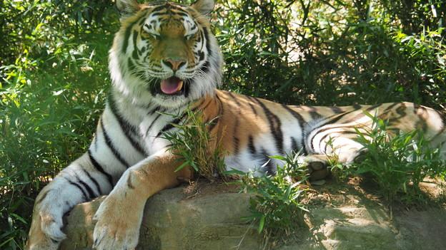 多摩動物公園 353