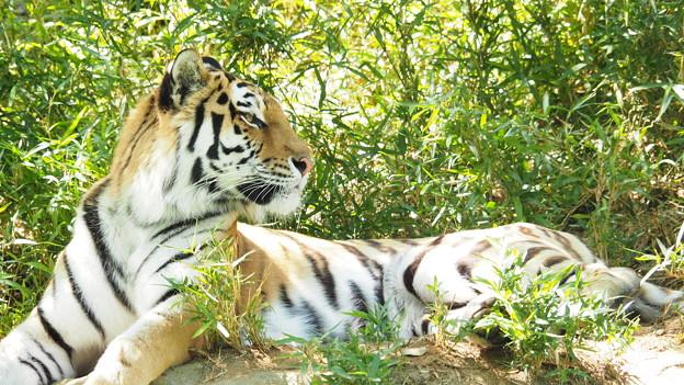 多摩動物公園 465