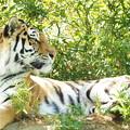 写真: 多摩動物公園 465