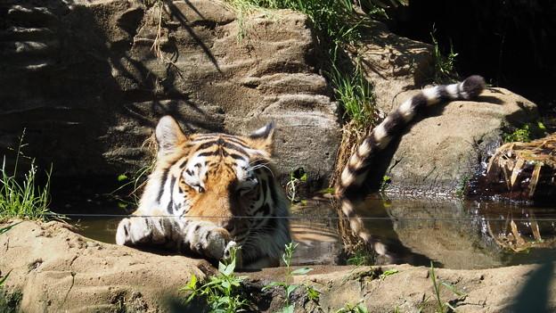 多摩動物公園 653