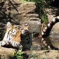 写真: 多摩動物公園 653