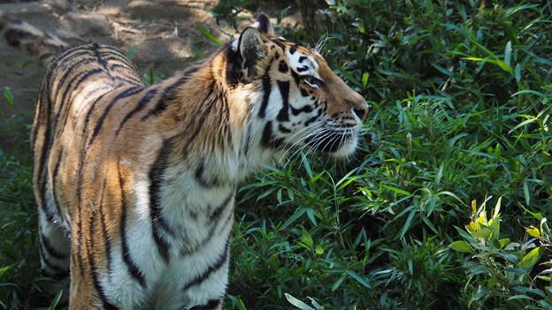 多摩動物公園 672