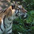 写真: 多摩動物公園 672