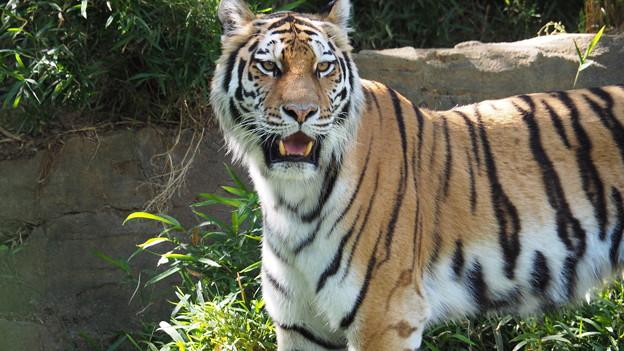 多摩動物公園 709