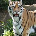 写真: 多摩動物公園 709
