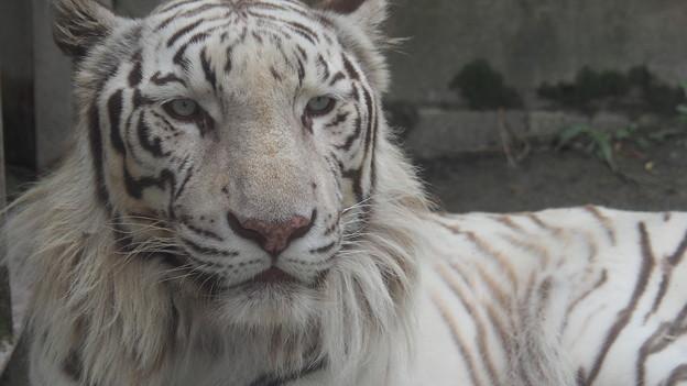東武動物公園 396