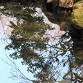 写真: 水面鏡