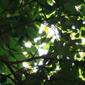 写真: こもれびの森