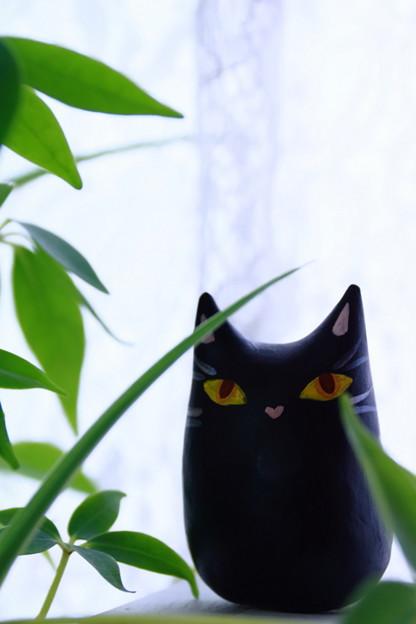 Photos: 窓際の猫