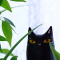 写真: 窓際の猫