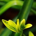 写真: 春の香