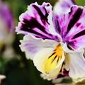 写真: 花まつり