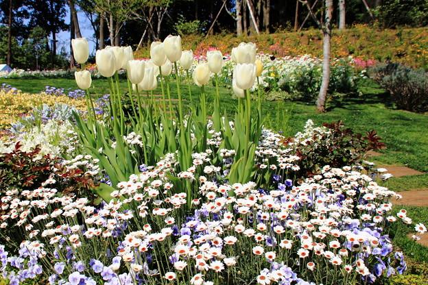 Photos: 白い花壇