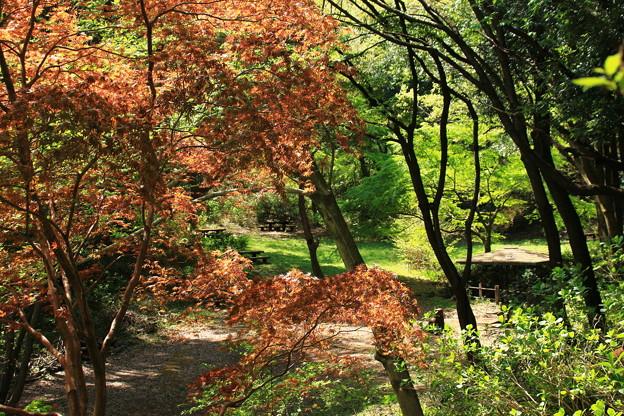Photos: 春の公園風景