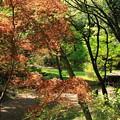 春の公園風景