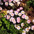 Photos: 小ぶりな花